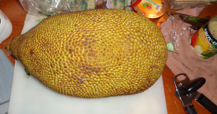Jackfruit Whole.png